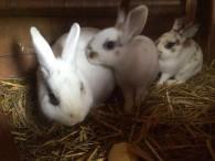 3 süße Kaninchen suchen ein Zuhause…