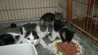 Und noch mehr Katzen-Baby´s