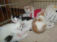 4 Kitten = vermittelt!!!!