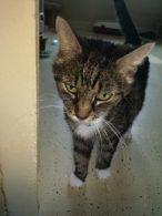 Bella Fundkatze hat ein wundevolles zu Hause gefunden