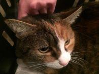Katze Karotte sucht echte Katzenmenschen